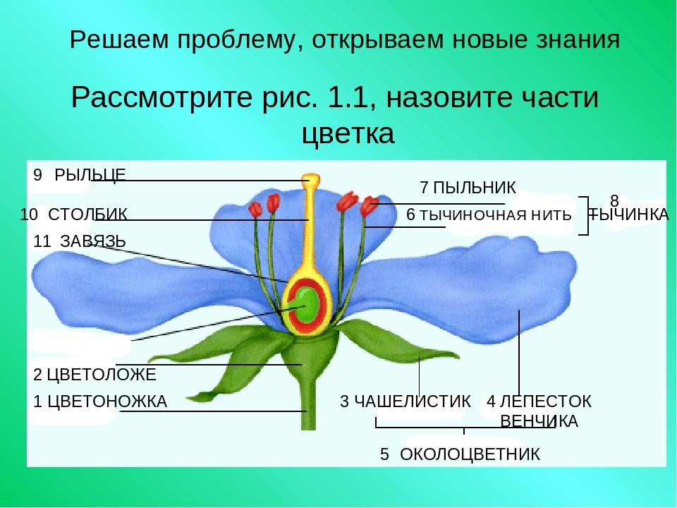 что устройство цветка картинки нос может содержать