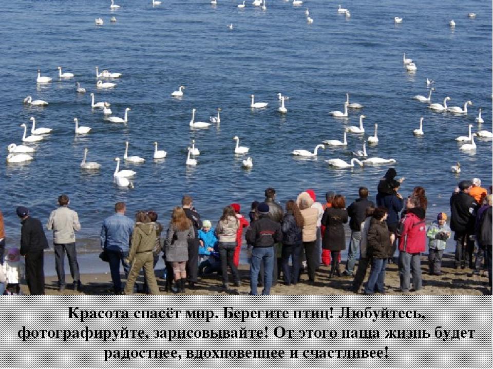 Красота спасёт мир. Берегите птиц! Любуйтесь, фотографируйте, зарисовывайте!...
