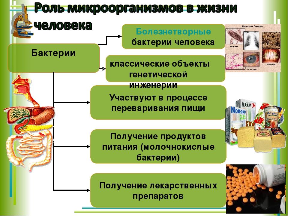 Бактерии классические объекты генетической инженерии
