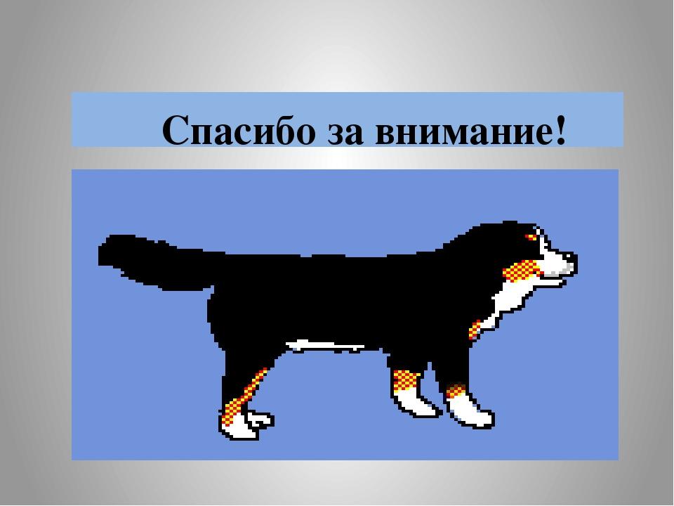 картинка собаки спасибо за внимание белфорт проходил