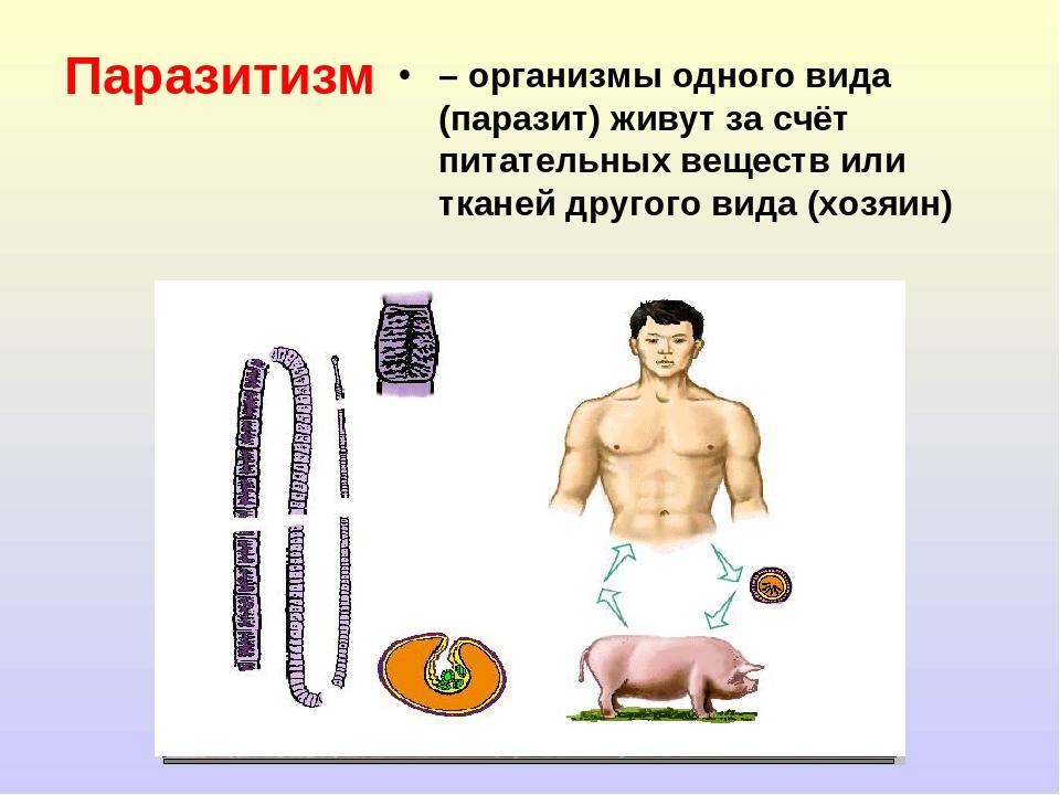 Паразитизм – организмы одного вида (паразит) живут за счёт питательных вещест...