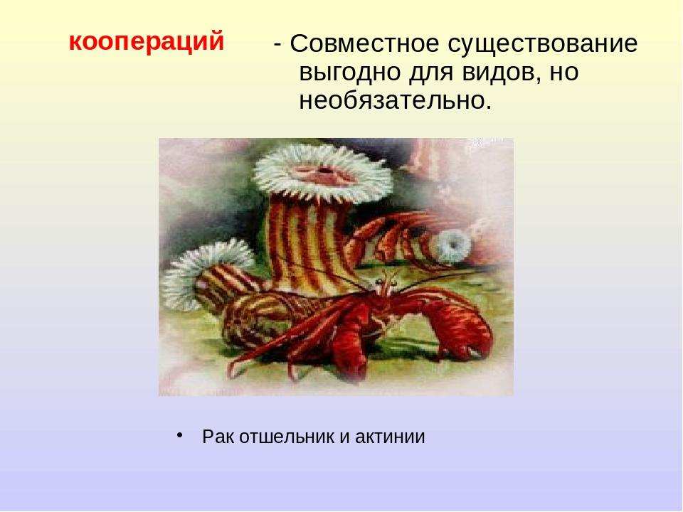 коопераций Рак отшельник и актинии - Совместное существование выгодно для вид...