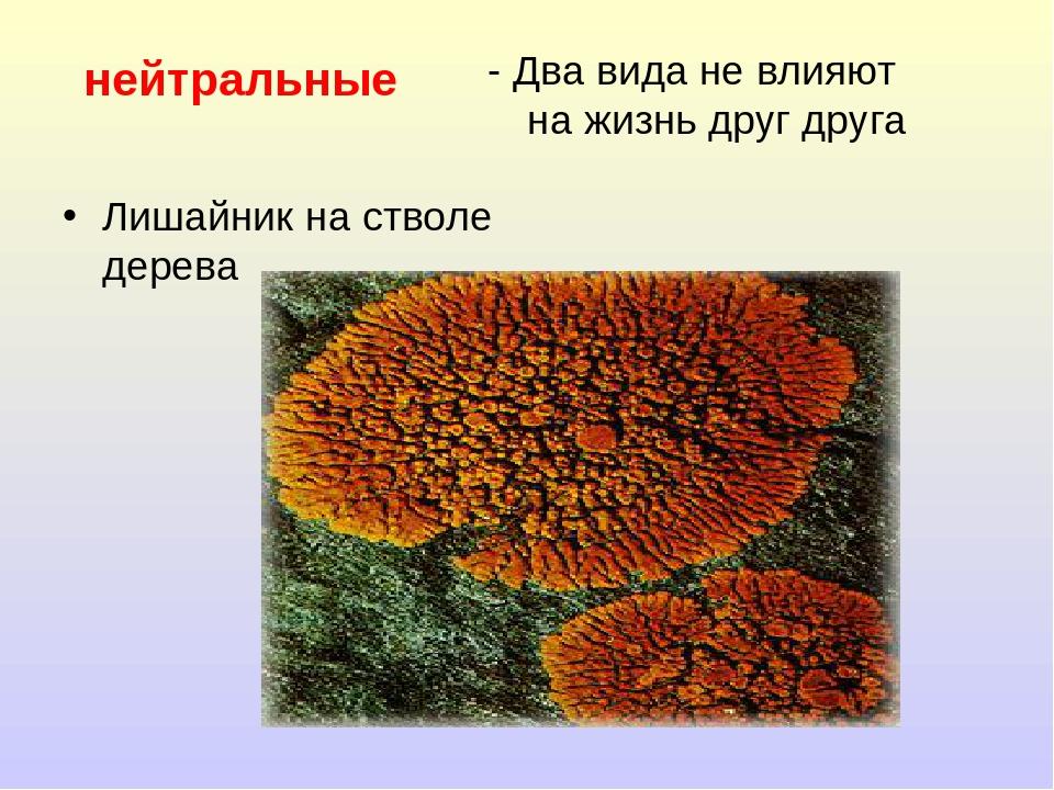 нейтральные Лишайник на стволе дерева - Два вида не влияют на жизнь друг друга