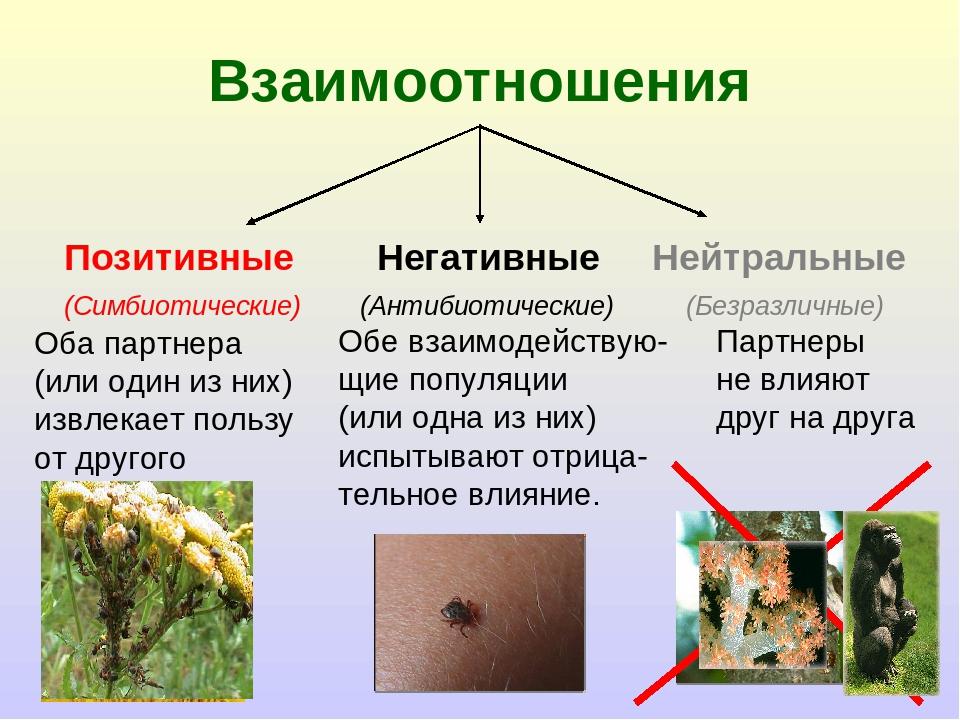 Взаимоотношения Позитивные Негативные Нейтральные (Симбиотические) (Антибиоти...