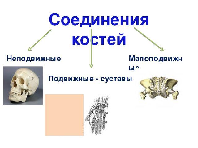 Реферат по биологии не подвижные и подвижные суставы атропил от суставов инструкция
