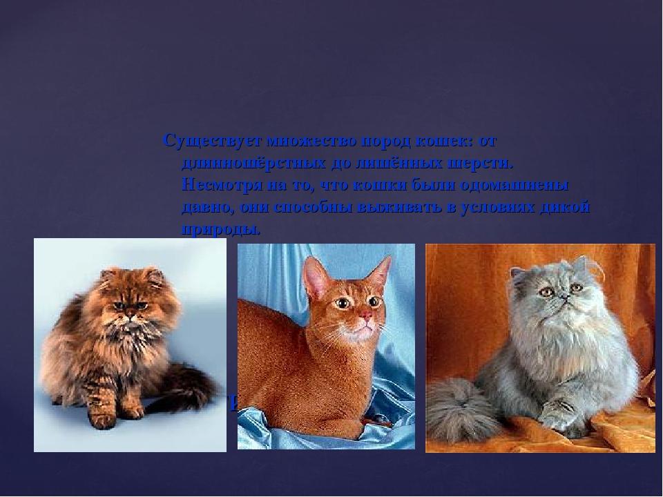 Существует множество пород кошек: от длинношёрстных до лишённых шерсти. Несмо...