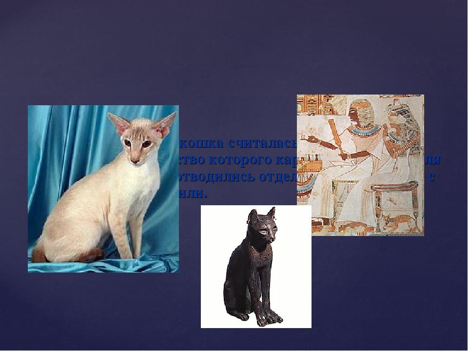 В Древнем Египте кошка считалась священным животным, убийство которого карало...