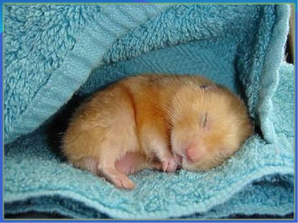 прозрачном спящий хомячок картинки зятю дорогому, красивому