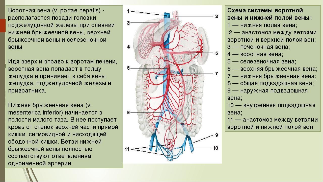 Großzügig Anatomie Und Physiologie Kapitel 19 Blut Ideen ...