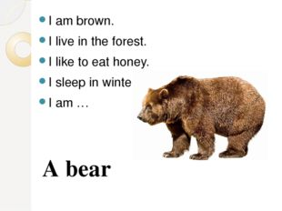 I am brown. I live in the forest. I like to eat honey. I sleep in winter. I a
