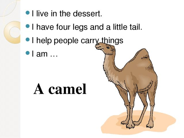 I live in the dessert. I have four legs and a little tail. I help people carr...