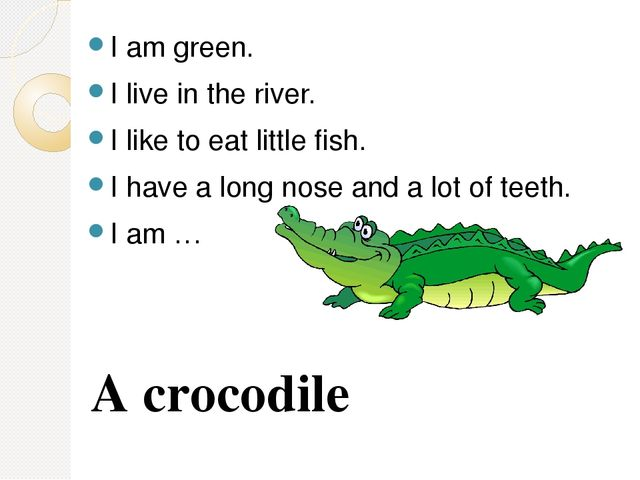 I am green. I live in the river. I like to eat little fish. I have a long nos...