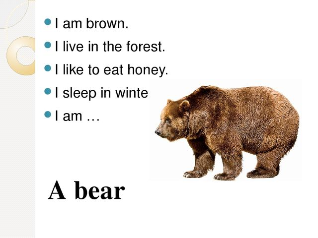 I am brown. I live in the forest. I like to eat honey. I sleep in winter. I a...