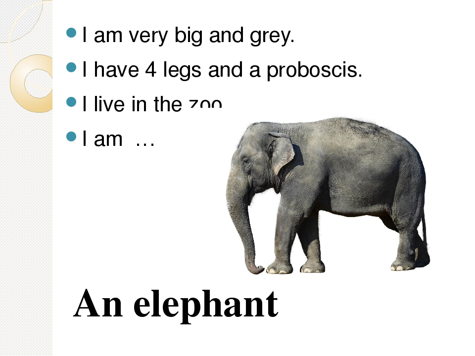 I am very big and grey. I have 4 legs and a proboscis. I live in the zoo. I a...