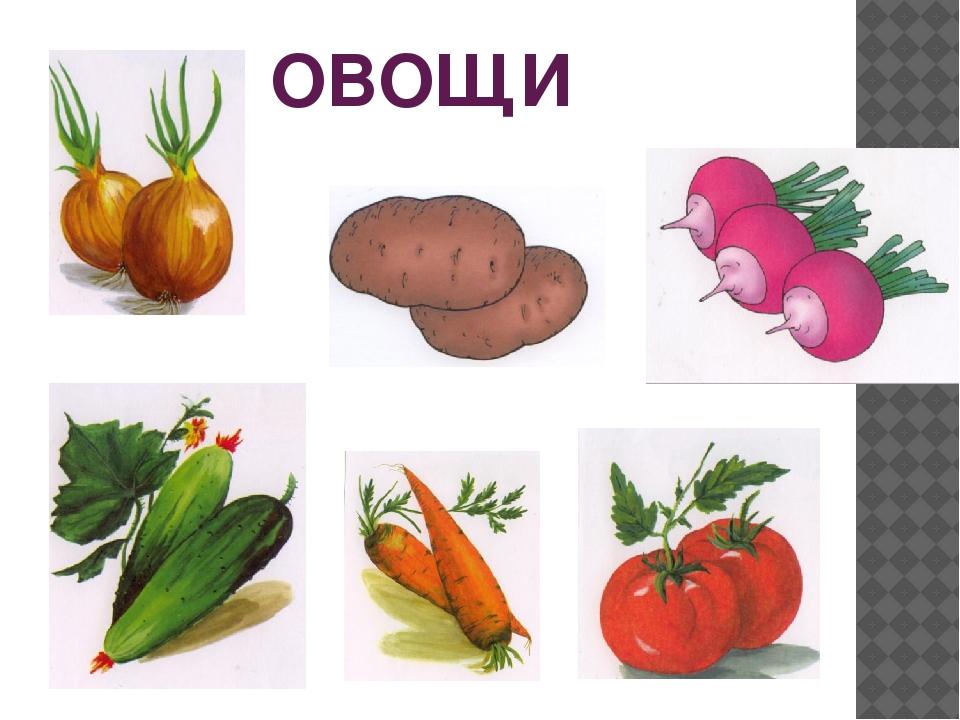 всё картинки на обобщающие понятия овощи сыну