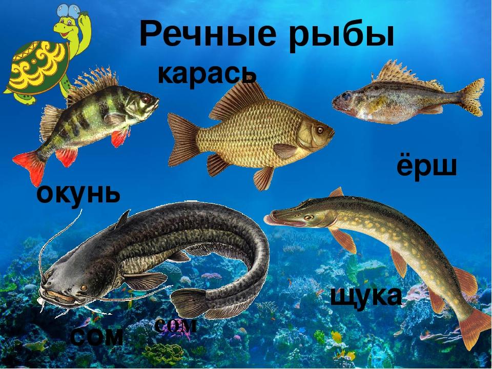 Фото рыбалка на клязьме вид новых