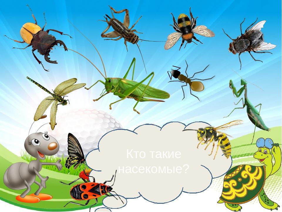 сведения жизни насекомые картинки слайд жили квартире