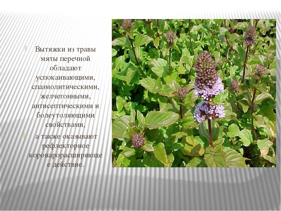 какие фармацевтические растения владеют антимикотическими свойствами