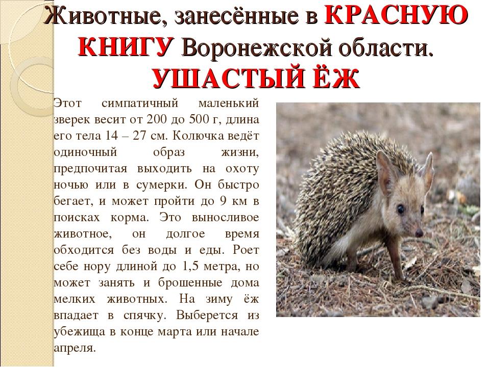 Животные воронежской области доклад 9595
