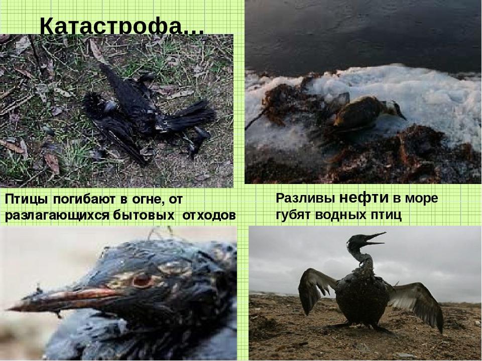 Катастрофа… Разливы нефти в море губят водных птиц Птицы погибают в огне, от...