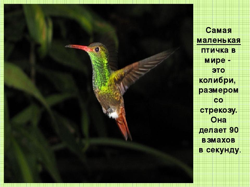 Самая маленькая птичка в мире - это колибри, размером со стрекозу. Она делает...