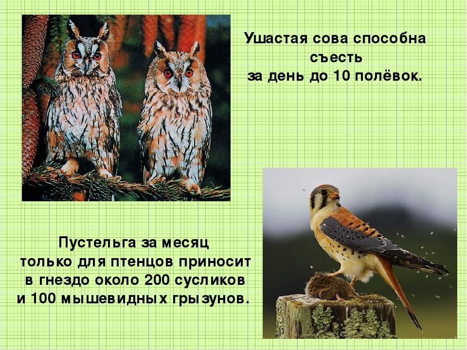 Ушастая сова способна съесть за день до 10 полёвок. Пустельга за месяц тольк...