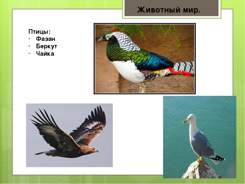окуня субтропики россии птицы фото сериала универ через