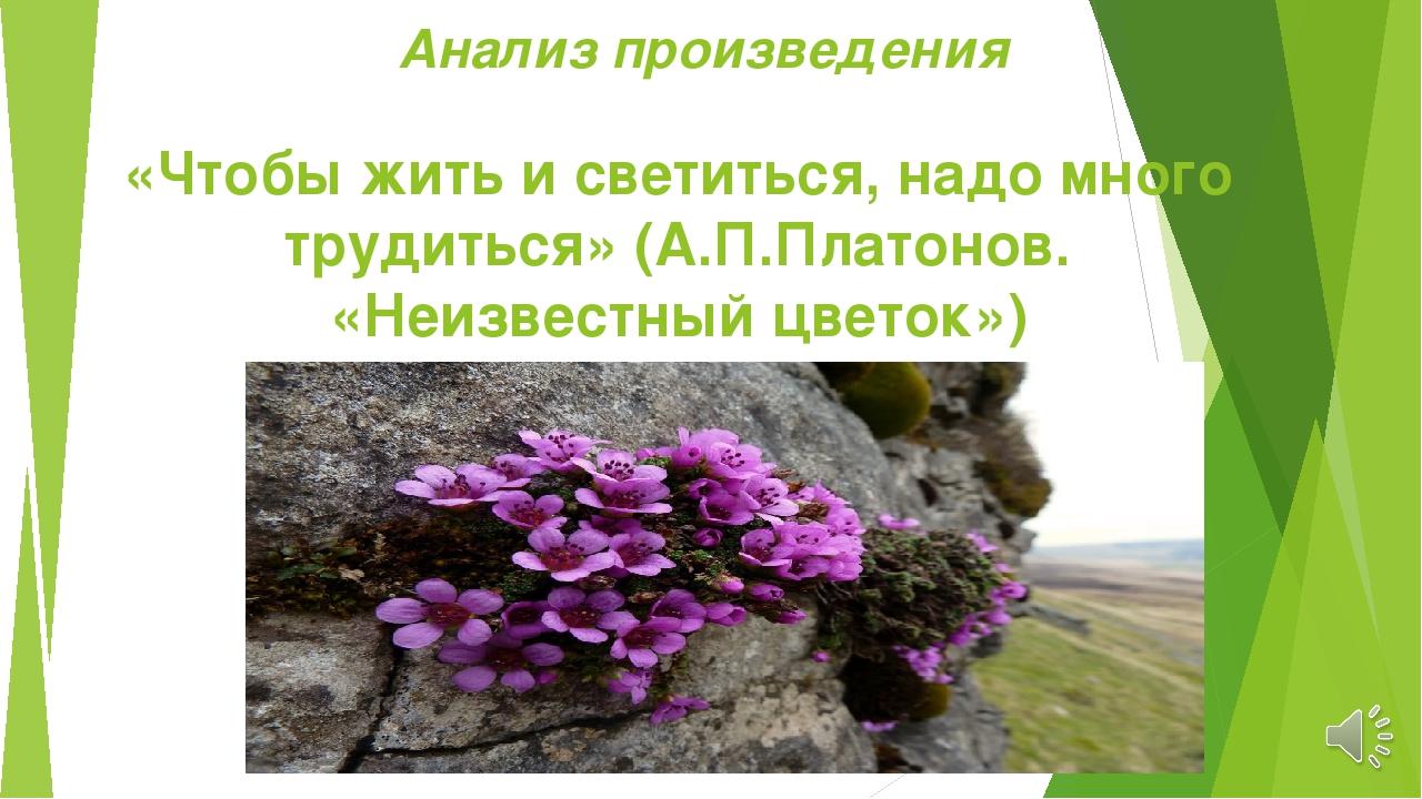 О чём произведение неизвестный цветок