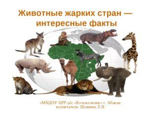 Животные жарких стран — интересные факты «МБДОУ ЦРР-д/с «Колокольчик» г. Аба