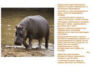 - Взрослый самец бегемота запросто может перекусить 3 метрового крокодила. -