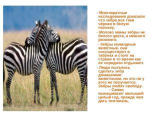 - Многократные исследования доказали что зебра все таки чёрная в белую полос