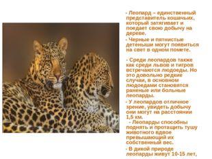 - Леопард – единственный представитель кошачьих, который затягивает и поедае