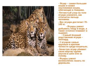 - Ягуар – самая большая кошка и самая неуловимая кошка, обитающая в Америке.