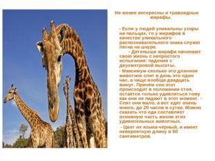 Не менее интересны и травоядные жирафы. - Если у людей уникальны узоры на пал
