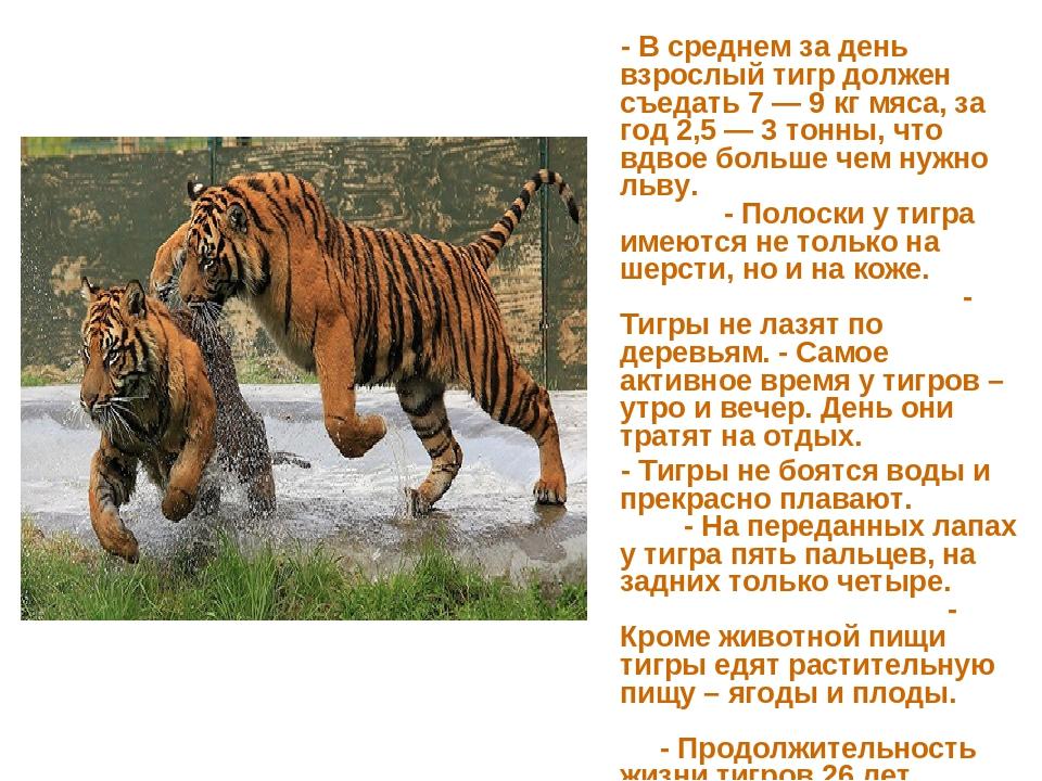 - В среднем за день взрослый тигр должен съедать 7 — 9 кг мяса, за год 2,5 —...