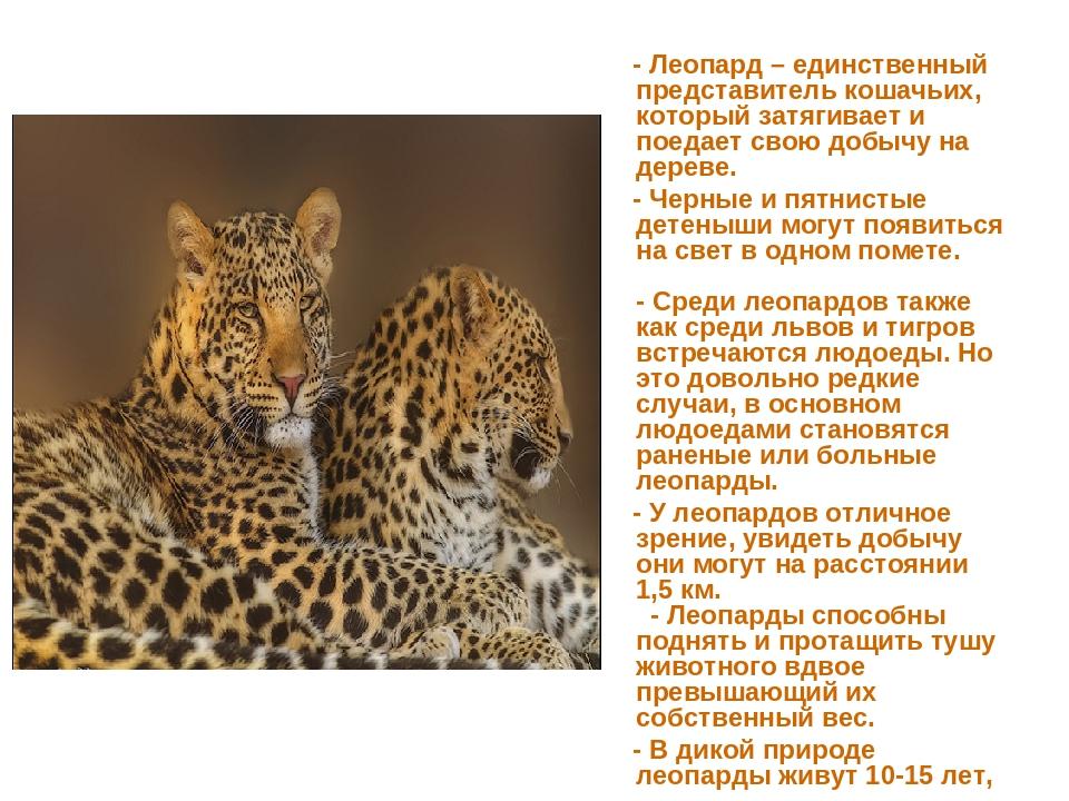 - Леопард – единственный представитель кошачьих, который затягивает и поедае...