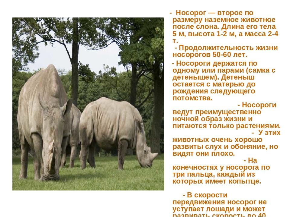 - Носорог — второе по размеру наземное животное после слона. Длина его тела...