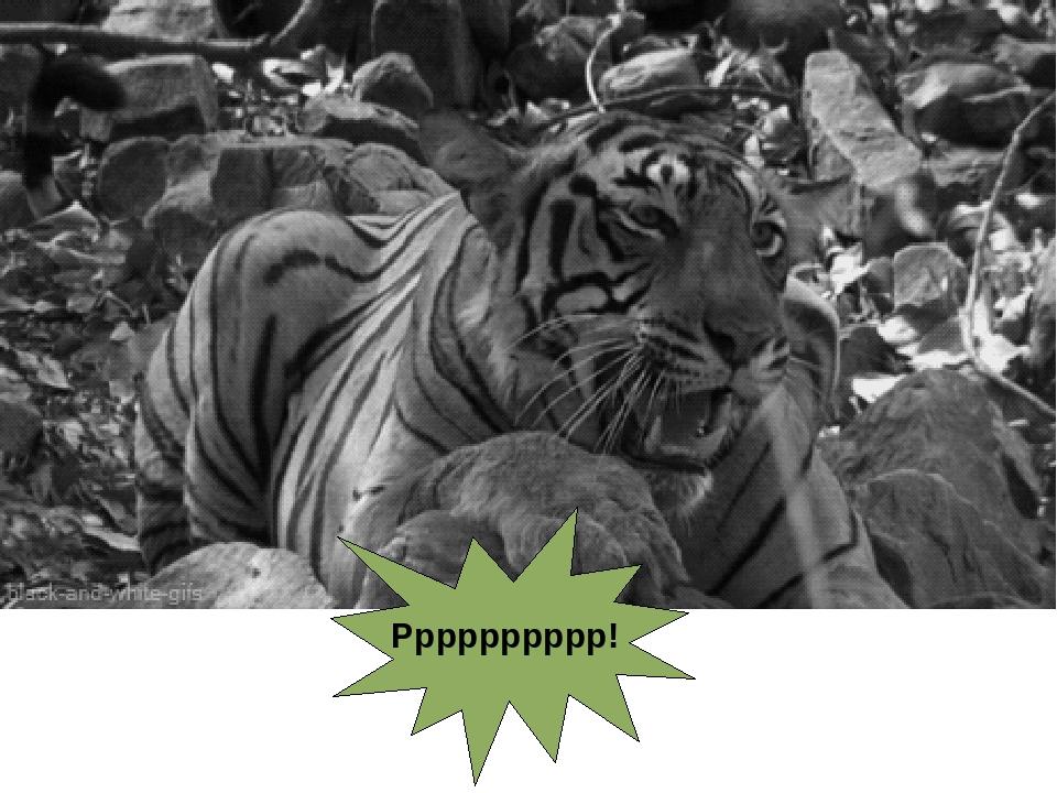 Гифка тигр рычит, как грустно без
