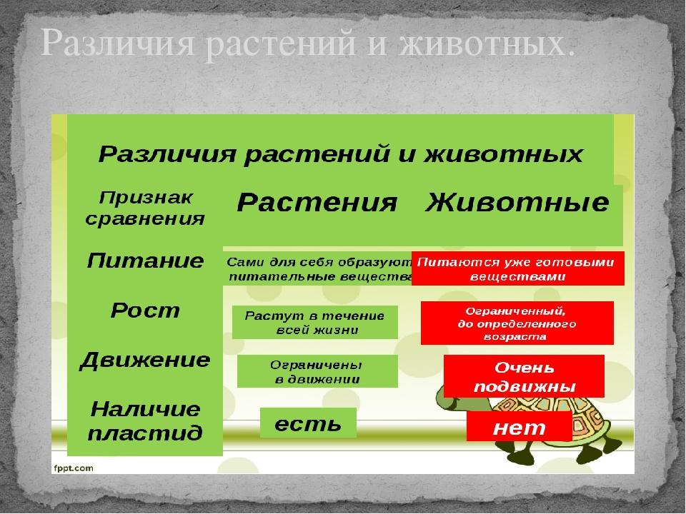 Различия растений и животных.