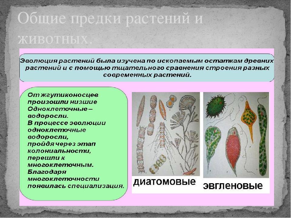 Общие предки растений и животных.