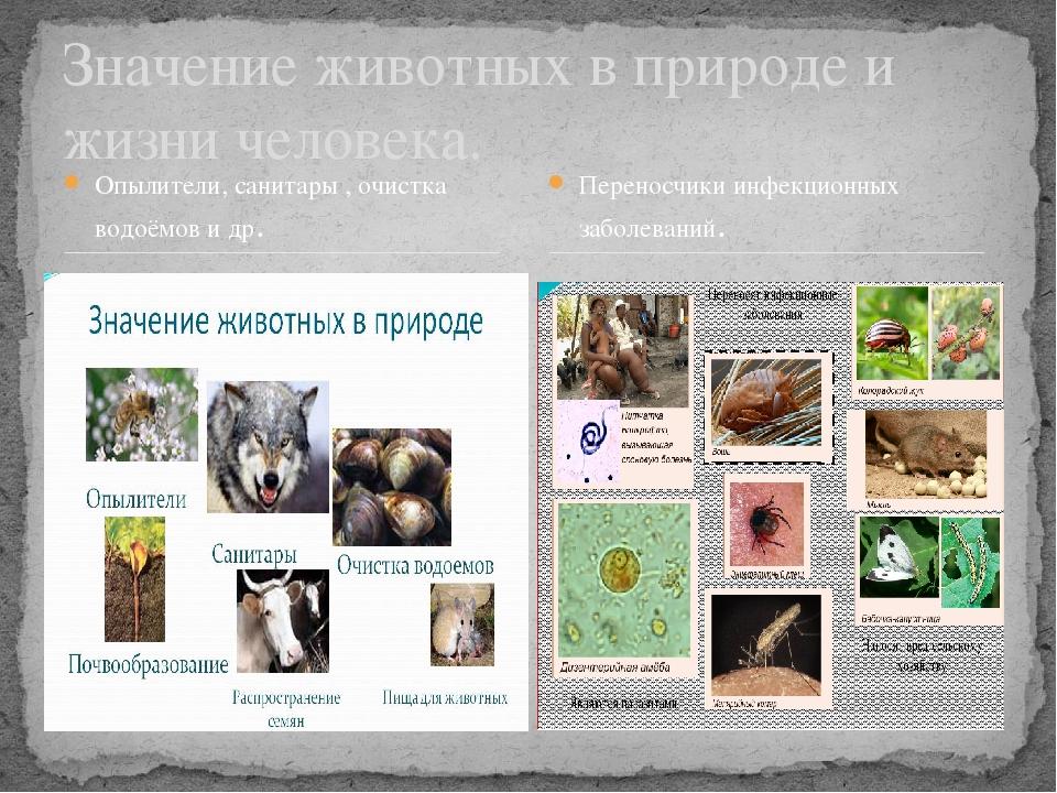 Опылители, санитары , очистка водоёмов и др. Значение животных в природе и жи...