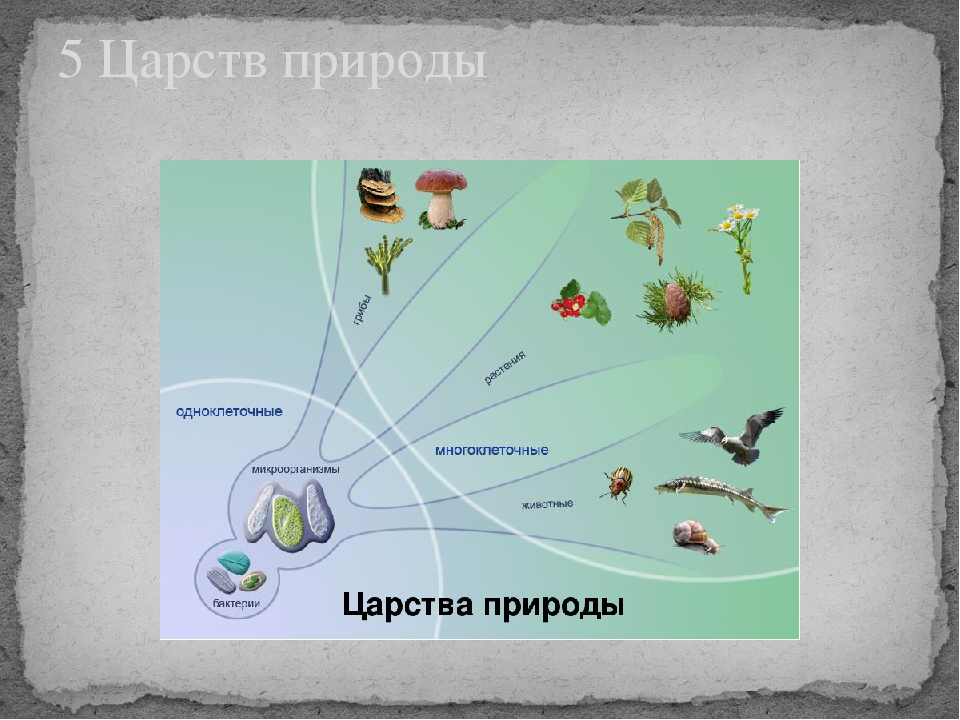 5 Царств природы