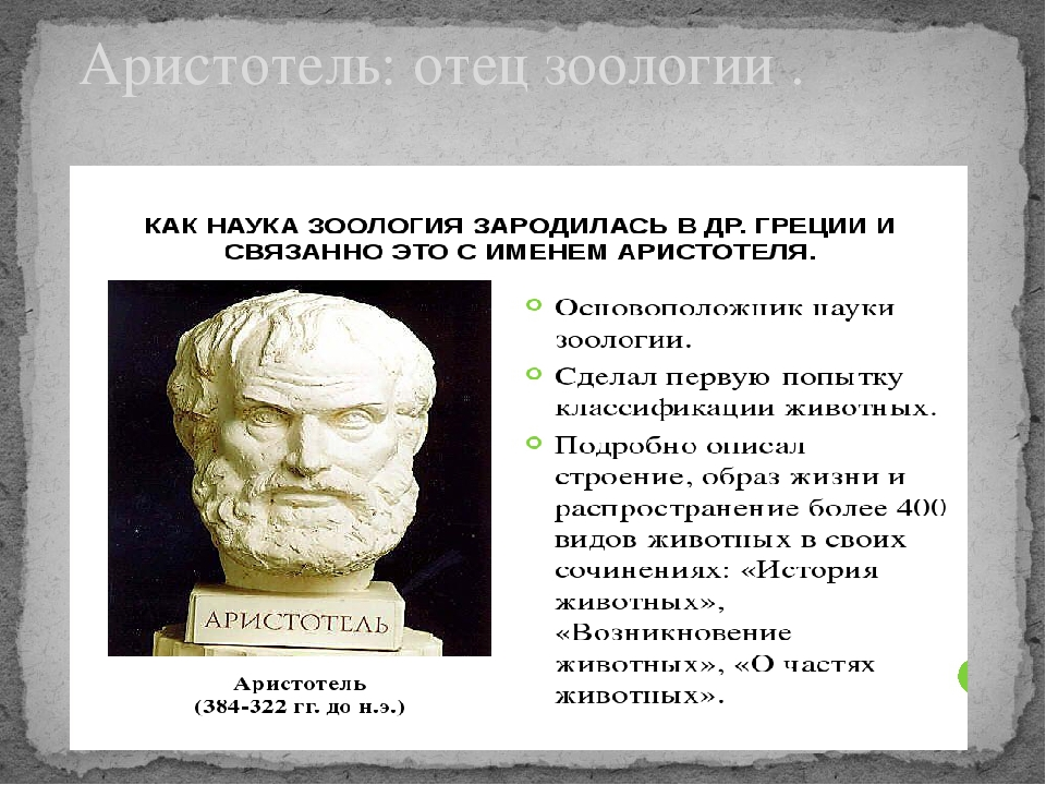 Аристотель: отец зоологии .