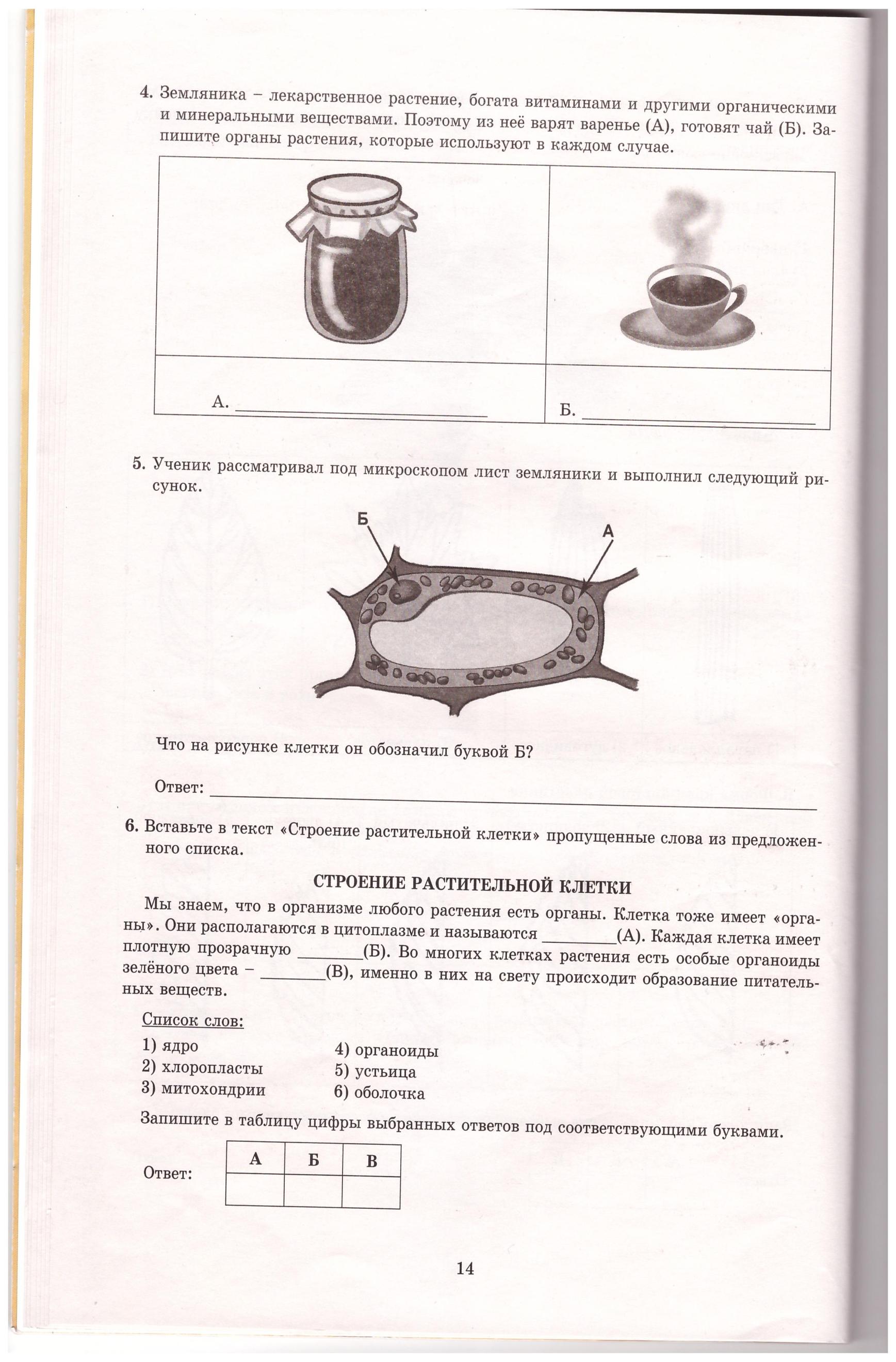 ВПР биология класс вариант  hello html m6f2d9869 png