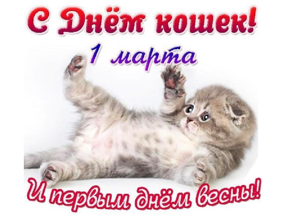 Поздравления с днём кошек