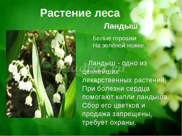 hello_html_422593e.jpg