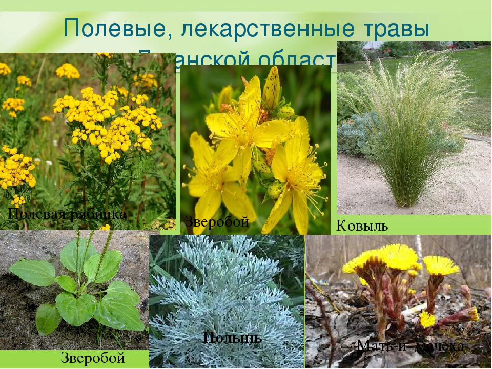 хочу растения оренбургской области фото с названиями и описанием кабинет руководителя