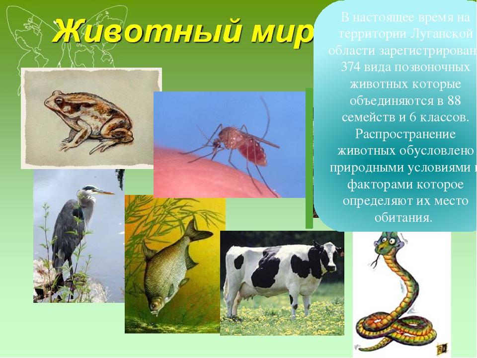 Реферат на тему животный и растительный мир 6422