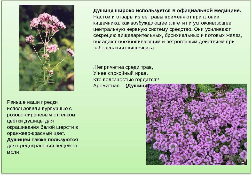 Лекарственные растения оренбургской области фото