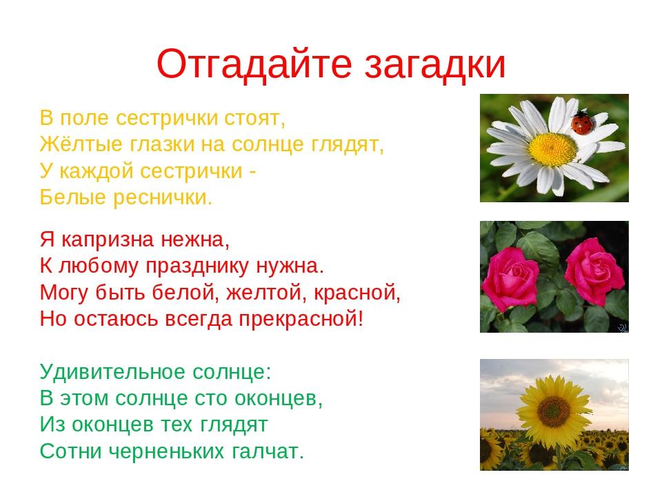 загадки про цветы с картинками моделью для